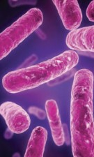 Could taking probiotics make you less anxious?