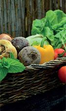 Vegetarian diet 'could have slight benefits in diabetes'