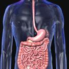 Stomach, Bowel & Bladder